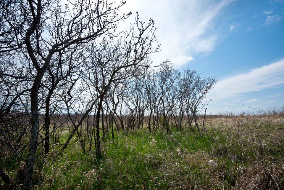 At the Edge of a Plum Thicket
