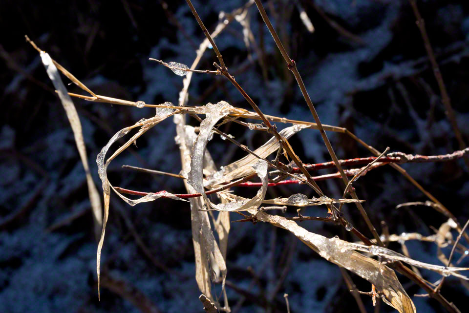 Ice on Dead Grass and Twigs