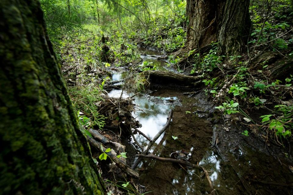 A Run Between Cottonwoods