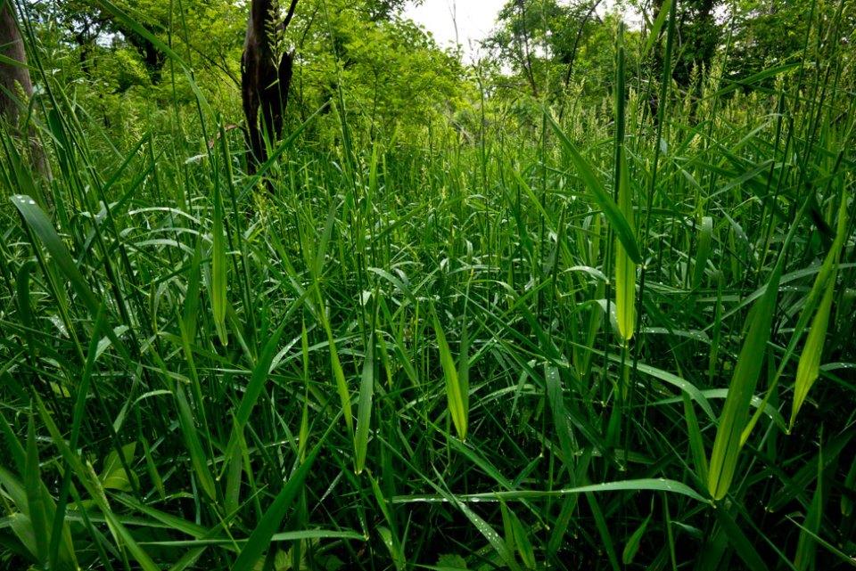 Chest-Deep-in-Wet-Grass