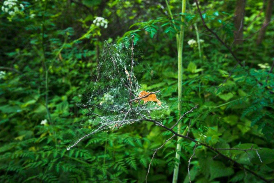 Cobweb-on-a-Twig