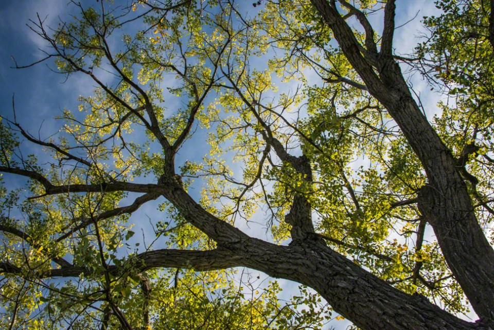 A Tinge of Gold in the High Cottonwoods