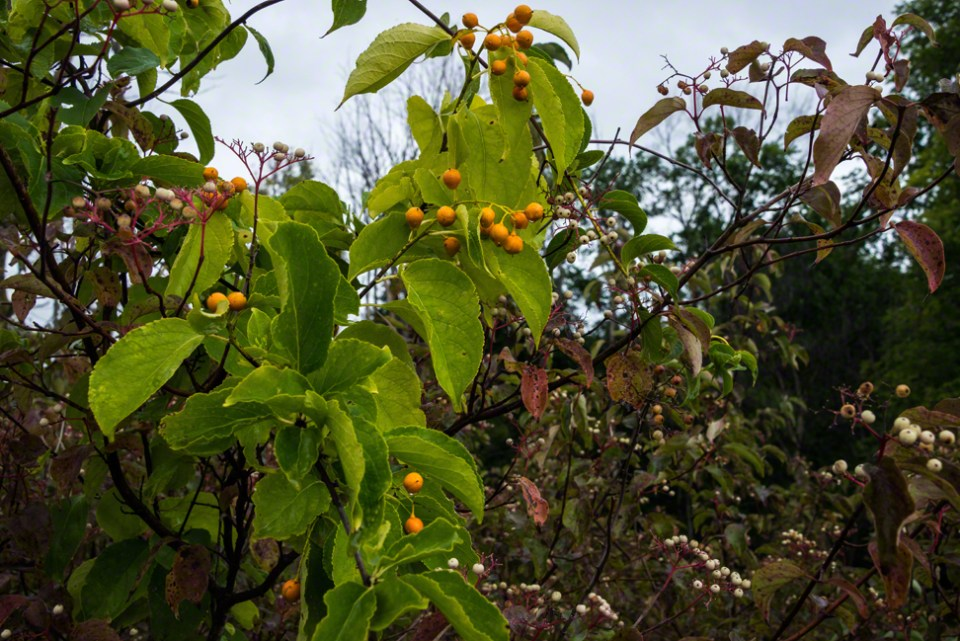 Mystery Orange Fruits
