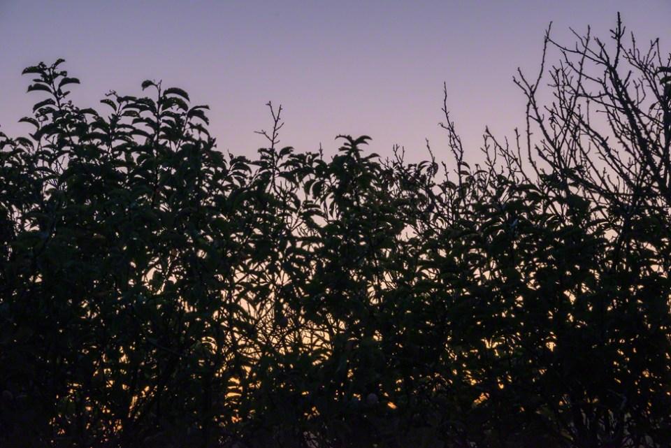 Pre-dawn Glow Through the East Parking Area Plumbush