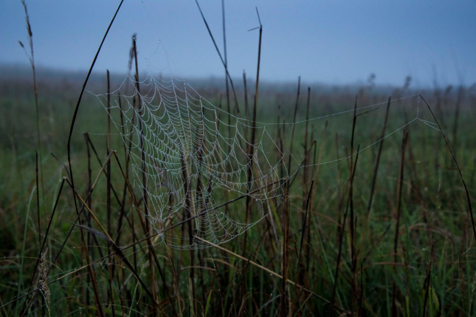 Spider Web in the Wet Fog