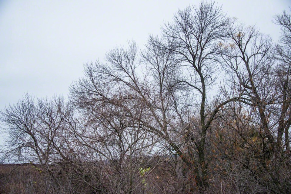 Bare Trees of the First Draw Against the Sky