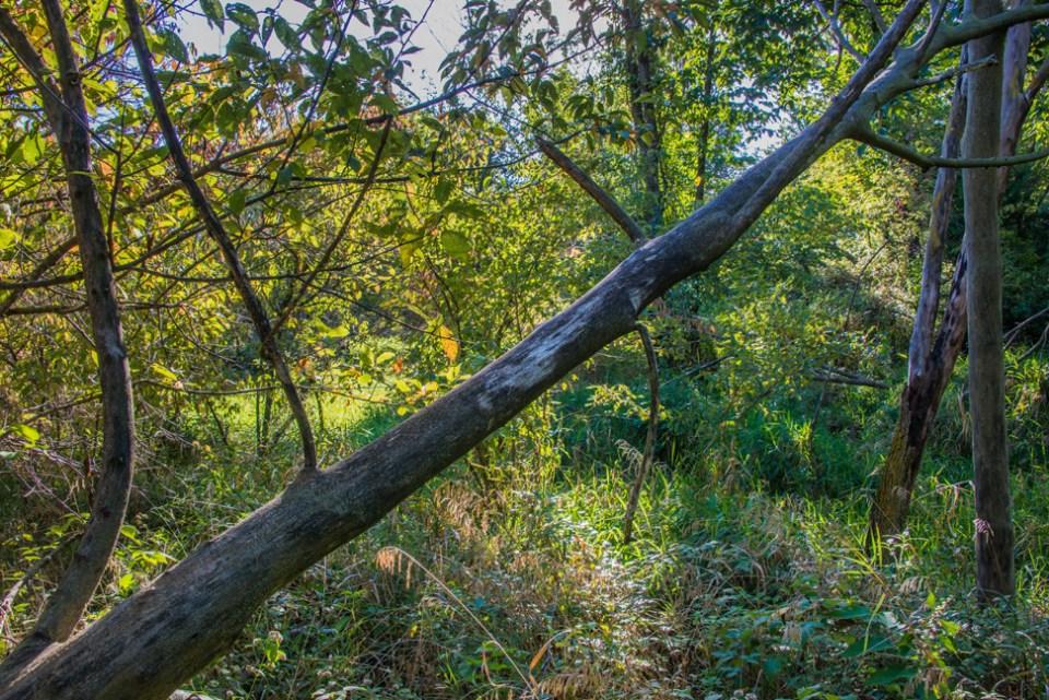 Dead Tree Diagonal