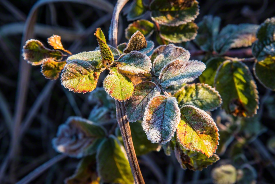 Early Morning Frost Starting to Melt
