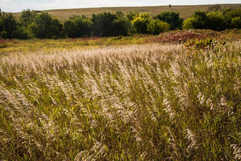 End of Season Grasses Backlit
