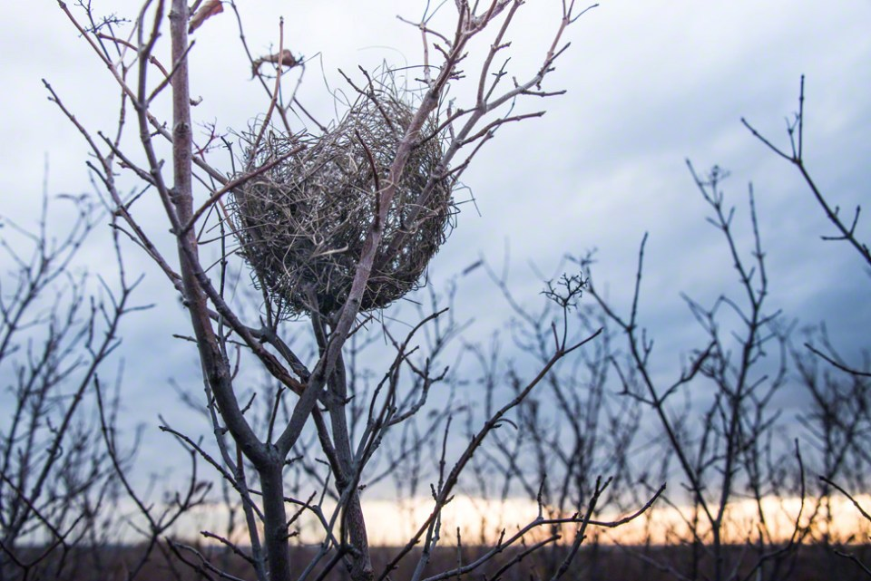 Frail Nest