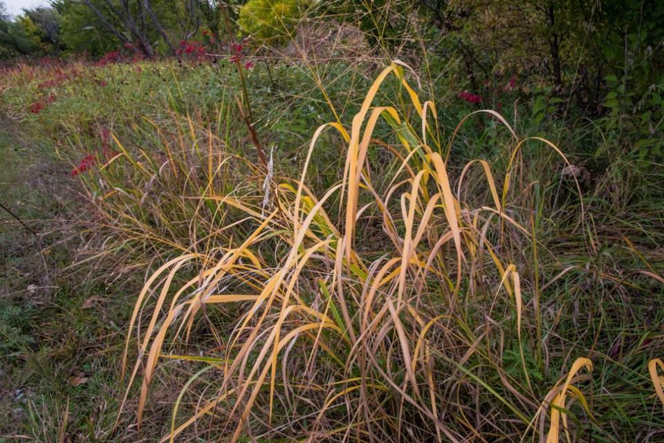 Gold Grass Spritz