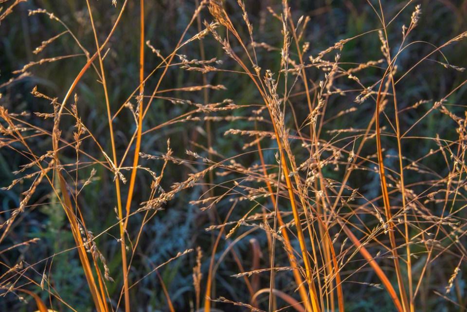 Grass Seeds - Still Clinging