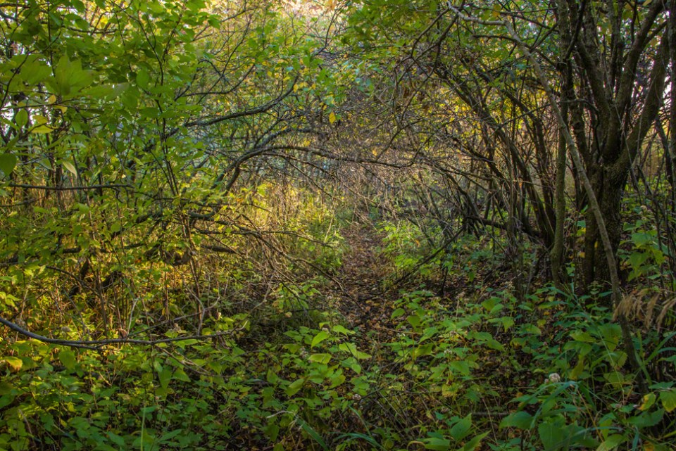 In the Tangly Undergrowth of the West Draw