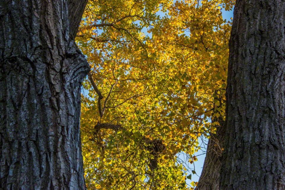 Leaves Turning Between the Trees