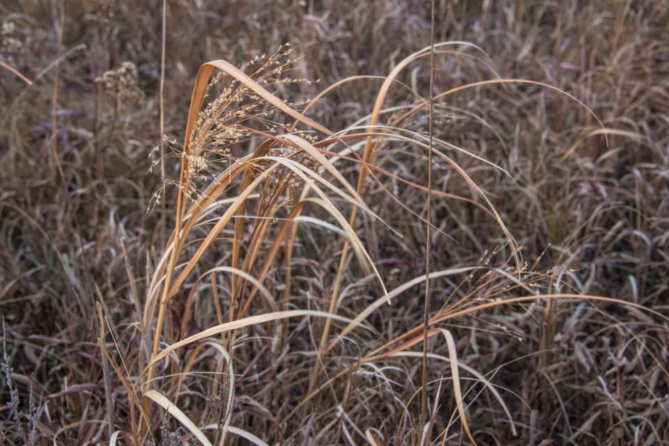 Little Bunch of Grass