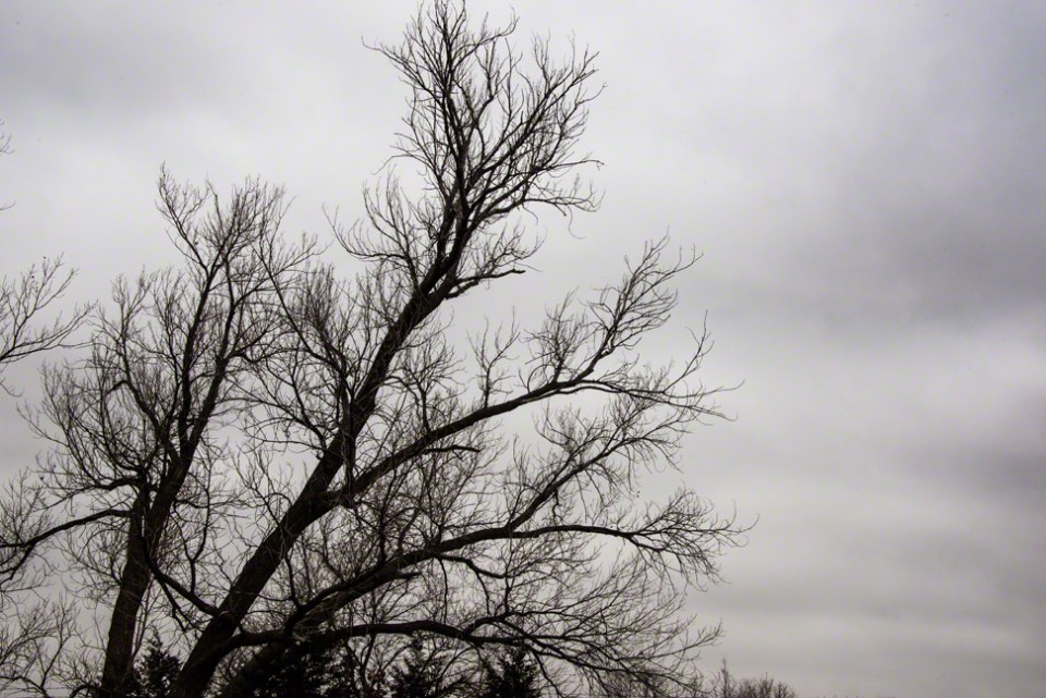 Nude Tree Branches Against a November Gray Sky