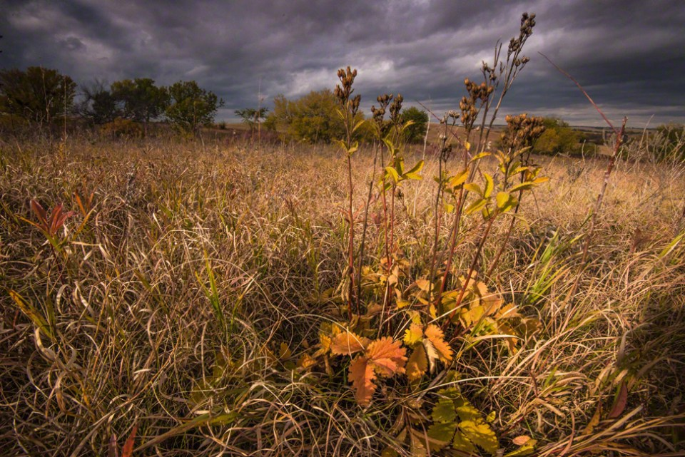 Seeded Out Plants Against a Threatening Sky
