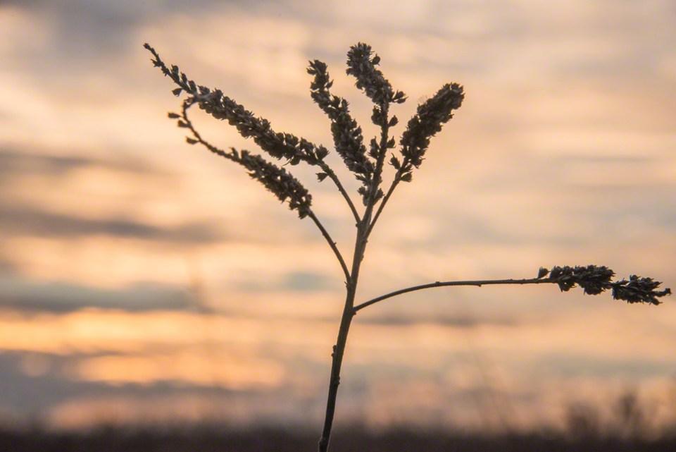 Seeds Against the Sky