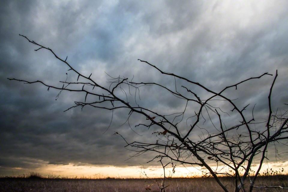 Thorny Locust Sapling Against a Dawn Sky