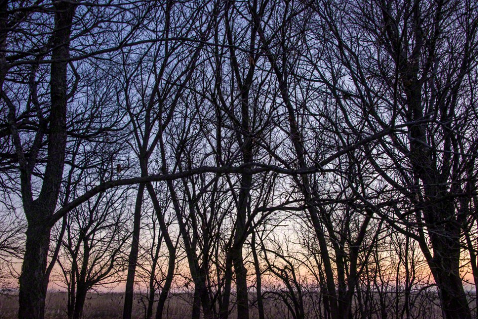 Dec 1 Dawn at the East Fence Line