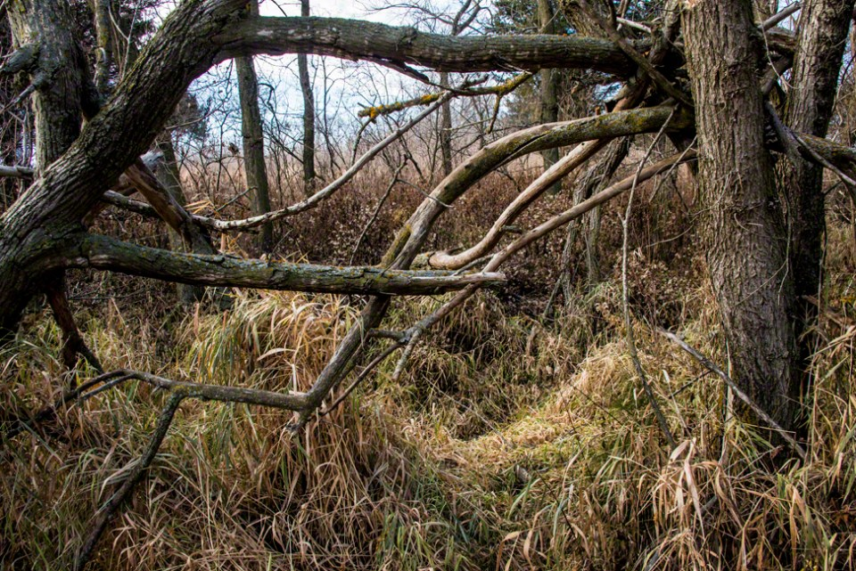 Down Tree Tangle in the South Draw