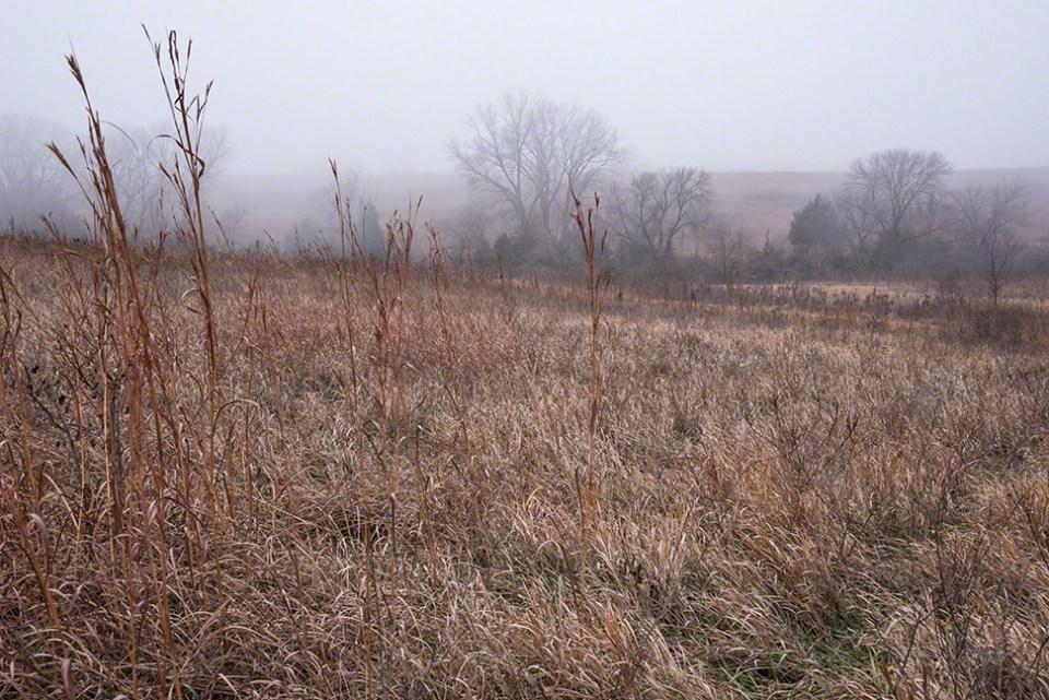Foggy Morning 2