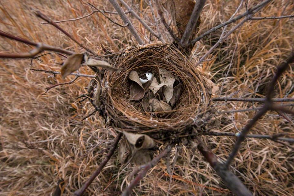 Last Spring's Nest...