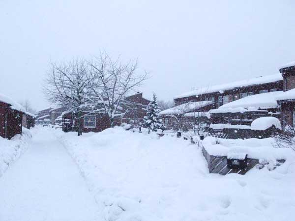 snow, skäcklinge äng, winter