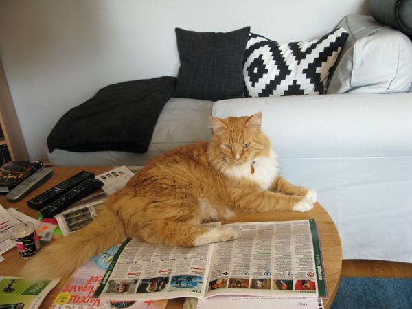 cat, gustav