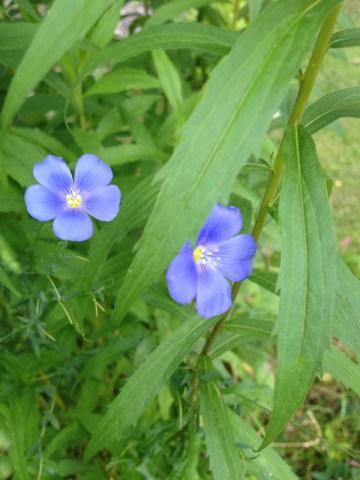 flowers2013_20
