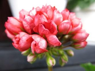 flowers2013_38