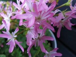flowers2013_45