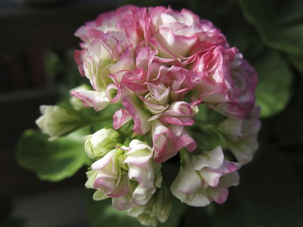 flowers2013_48