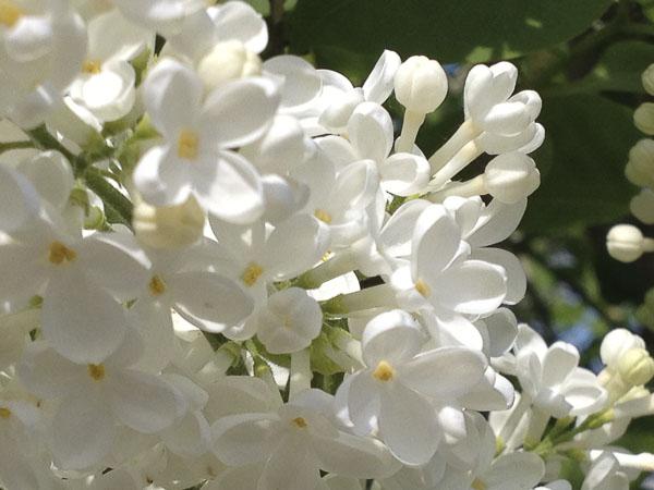 flowers2013_5