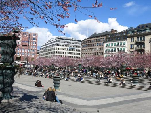 cherryblossoms, kungsan, kungsträdgården, stockholm