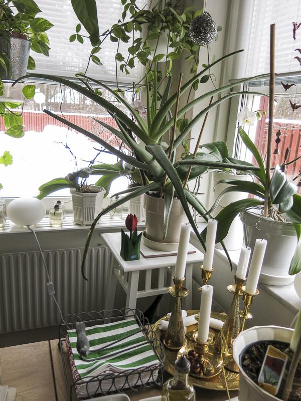 kitchen. greenery, green