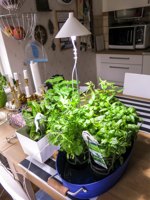 Natural light lamp and herbs