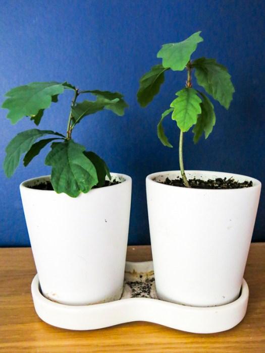 oakplants