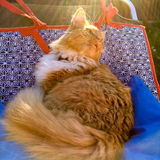 gustav, cat, sunbed