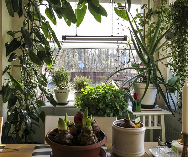 plants, kitchen, kitchenwindow