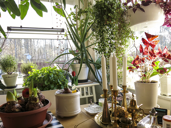 plants, kitchen, kitchenwindows