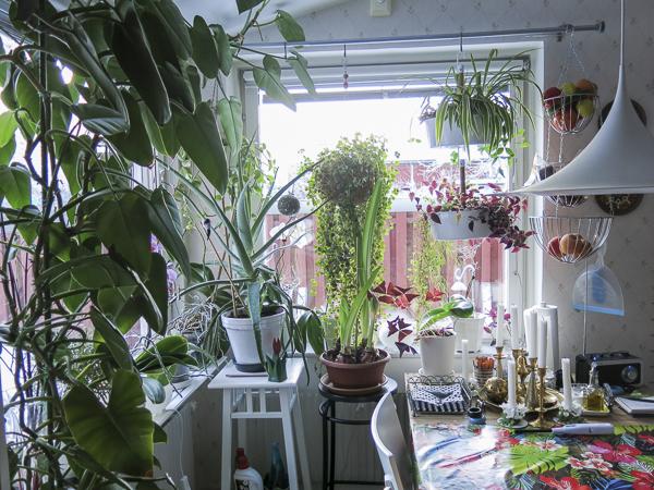 kitchengreens