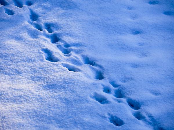snow, path