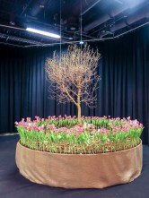 A tree hanging in the air surrounded by tulips
