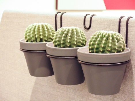 Cactus in an offic environment