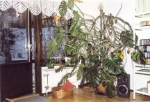 The monster-size monstera we had for a while.