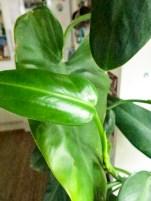 plant_14