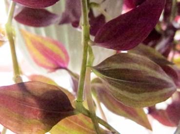 plant_16