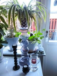 plants, glass