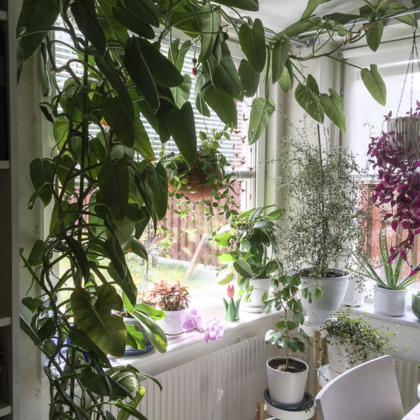 plants, houseplants, kitchenwindow